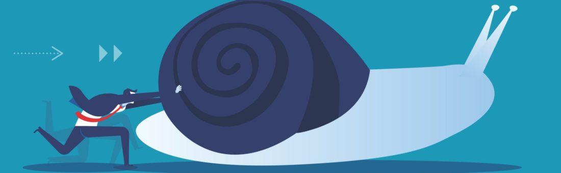 bus_snail